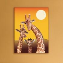 Žirafes