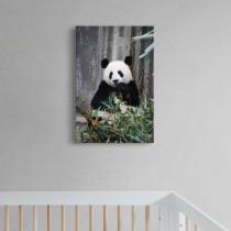 Taiki panda