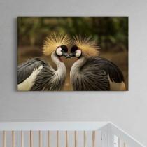 Pora paukščių