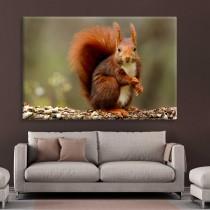 Didinga voverė