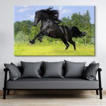 Melnais zirgs