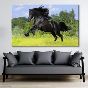 Juodas žirgas