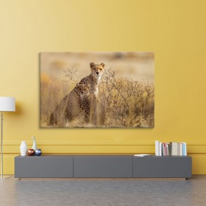 Leopardai