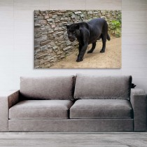 Juodoji pantera
