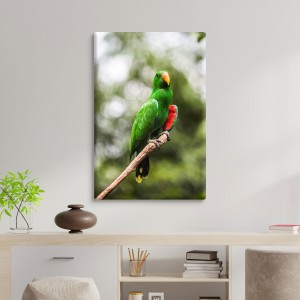 Papagailis
