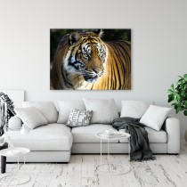 Bengālijas Tīģeris