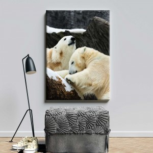 Baltie lāči