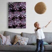 Violeti sukulenti