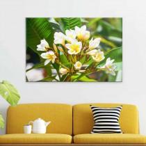 Blume aus Griechenland