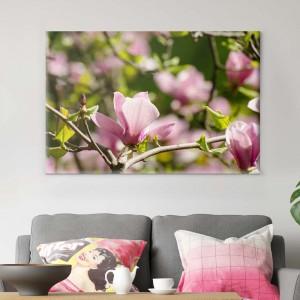 Magnolijas koks