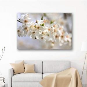 Baltie ābeles ziedi